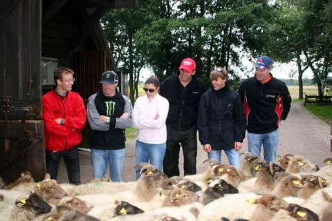 rrijders_schapen