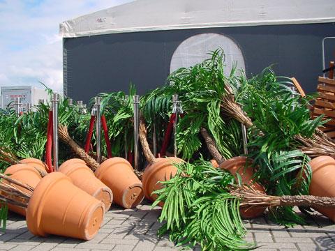palmbomen_omgewaaid