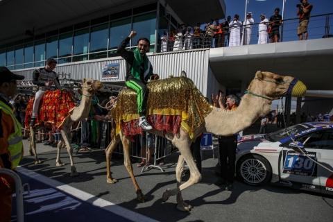 kameel 800pix