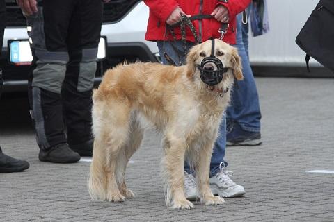2019 Hond